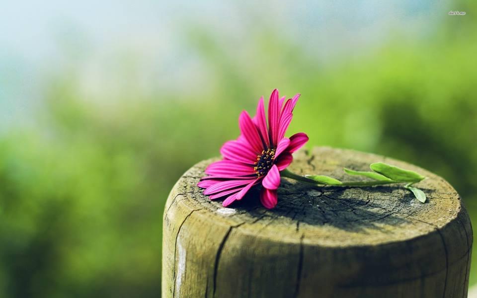 7 lý do vì sao bạn cứ mãi tầm thường và kém cỏi